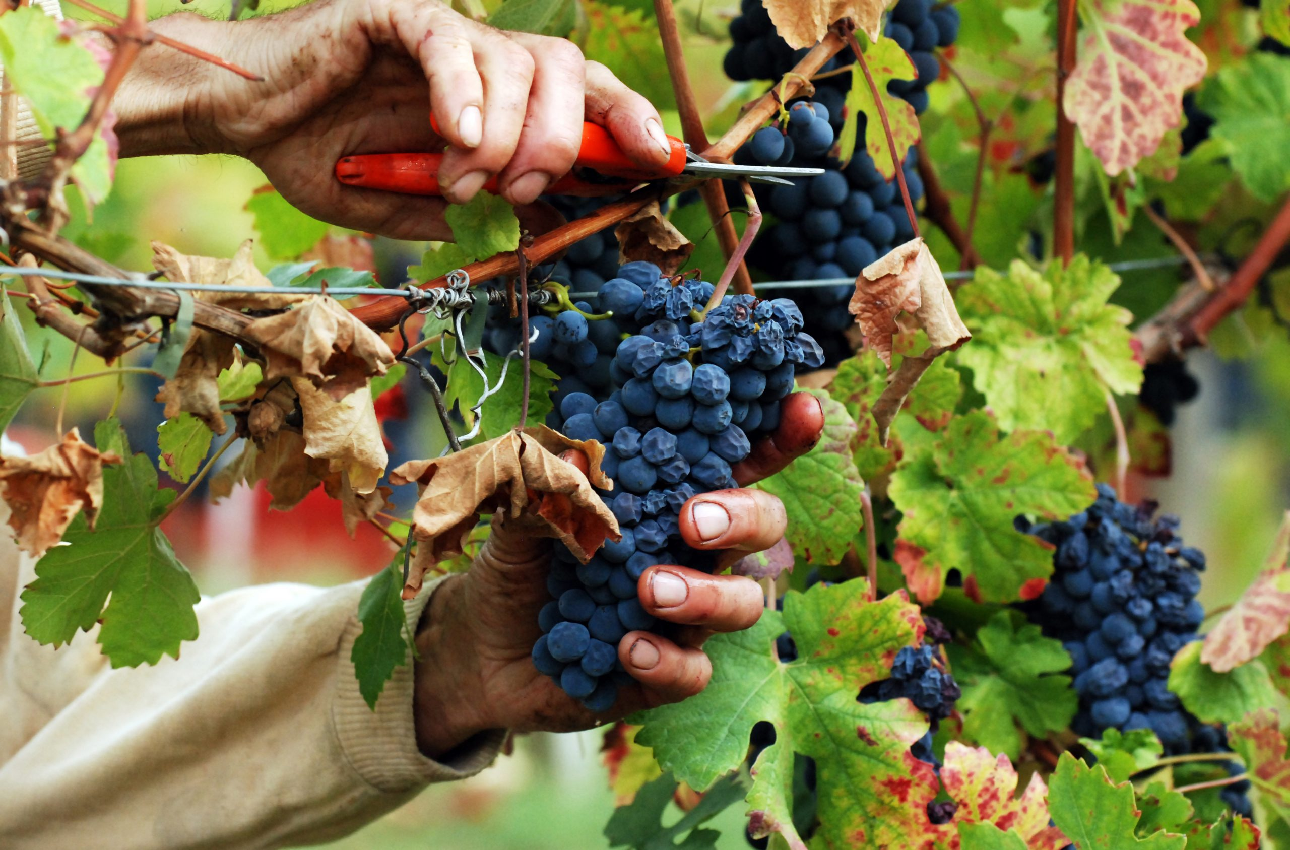 Vini di Sicilia